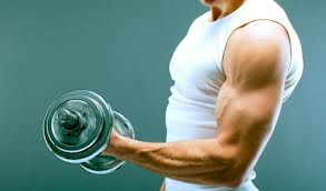 Otot Bisep dan Trisep